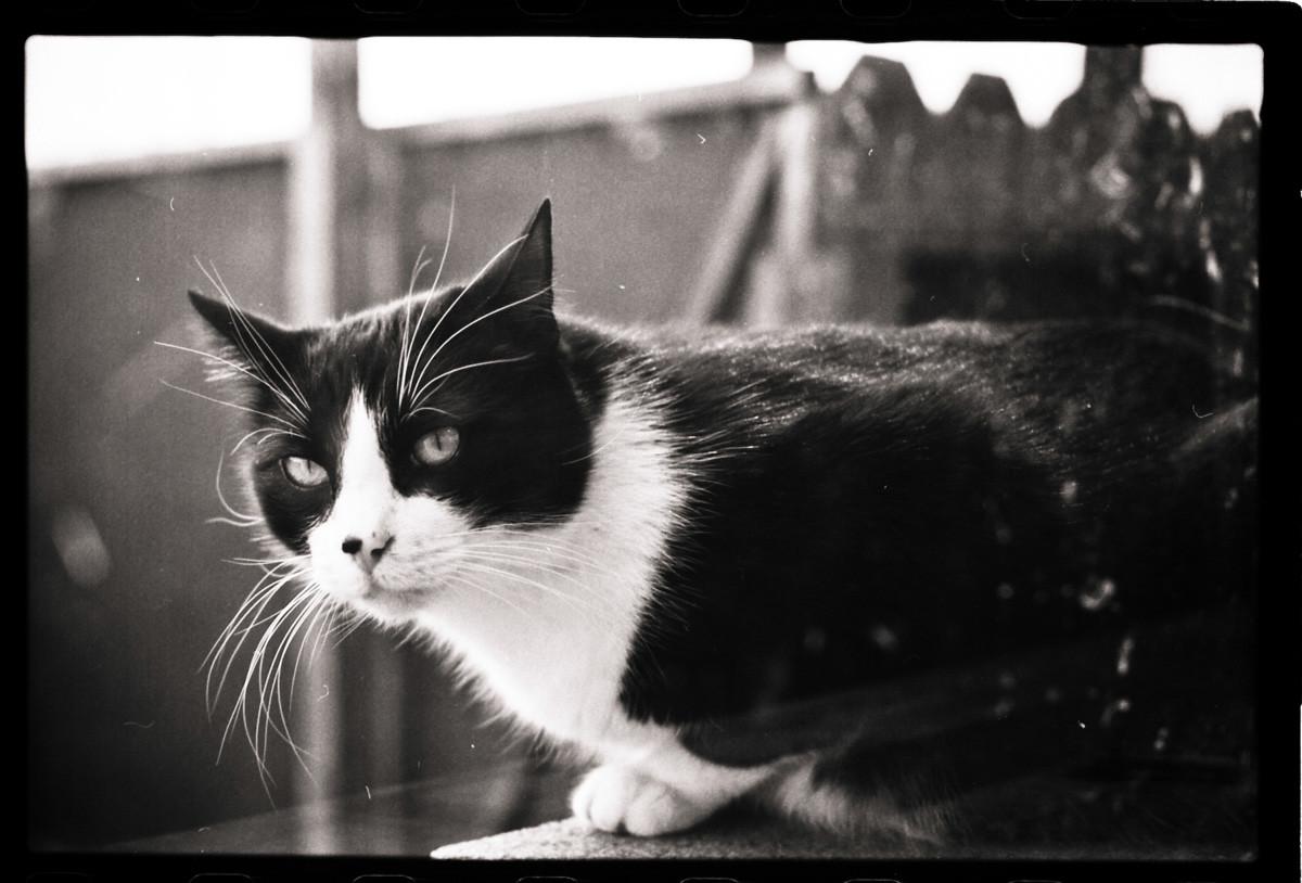 Garys cat, SJ, Ca.