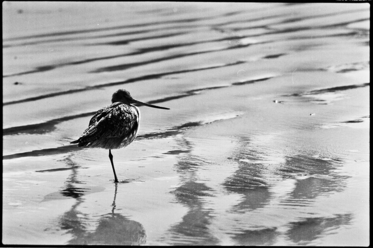 Bird, beach San Diego, CA.