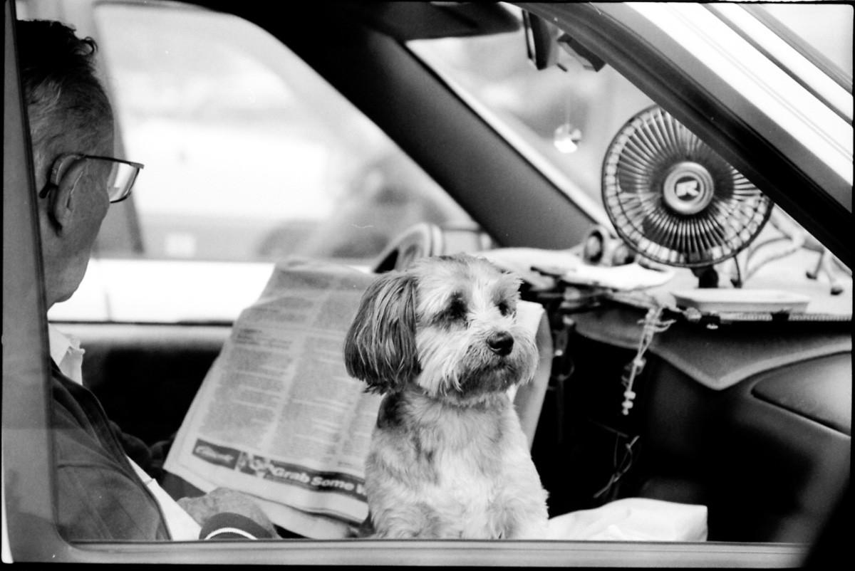 Dog in car, LA, Ca.